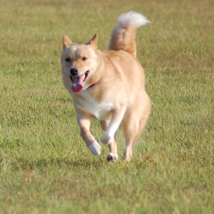 『犬走り』を極めマニアックな世界の覇者となる!