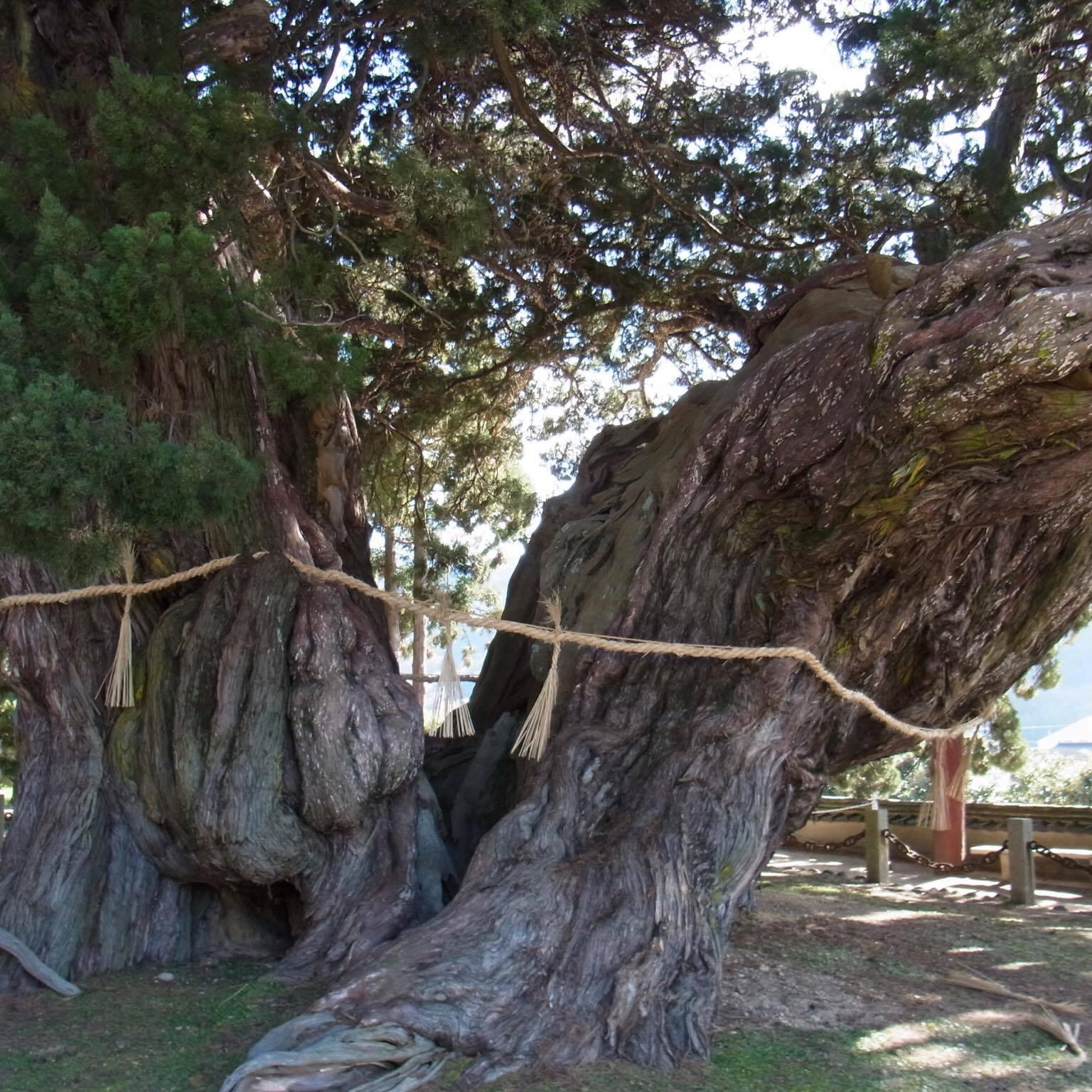 「国指定特別天然記念物を守るために」 透水性・環境・見学会・香川
