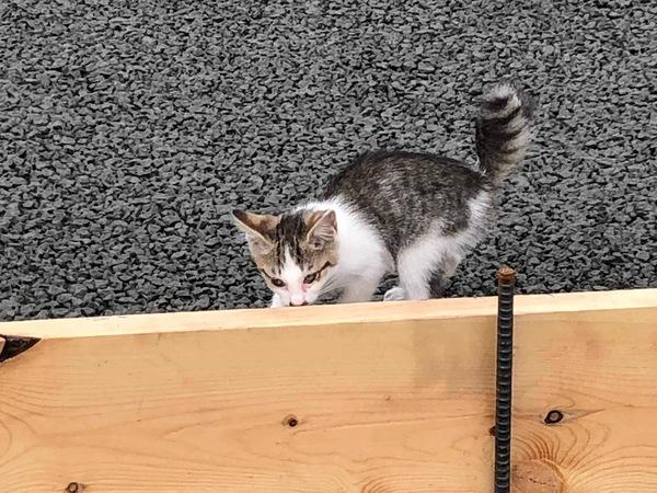 猫ちゃんも大好き♡『ドライテック』|透水性コンクリート・ドライテック・猫