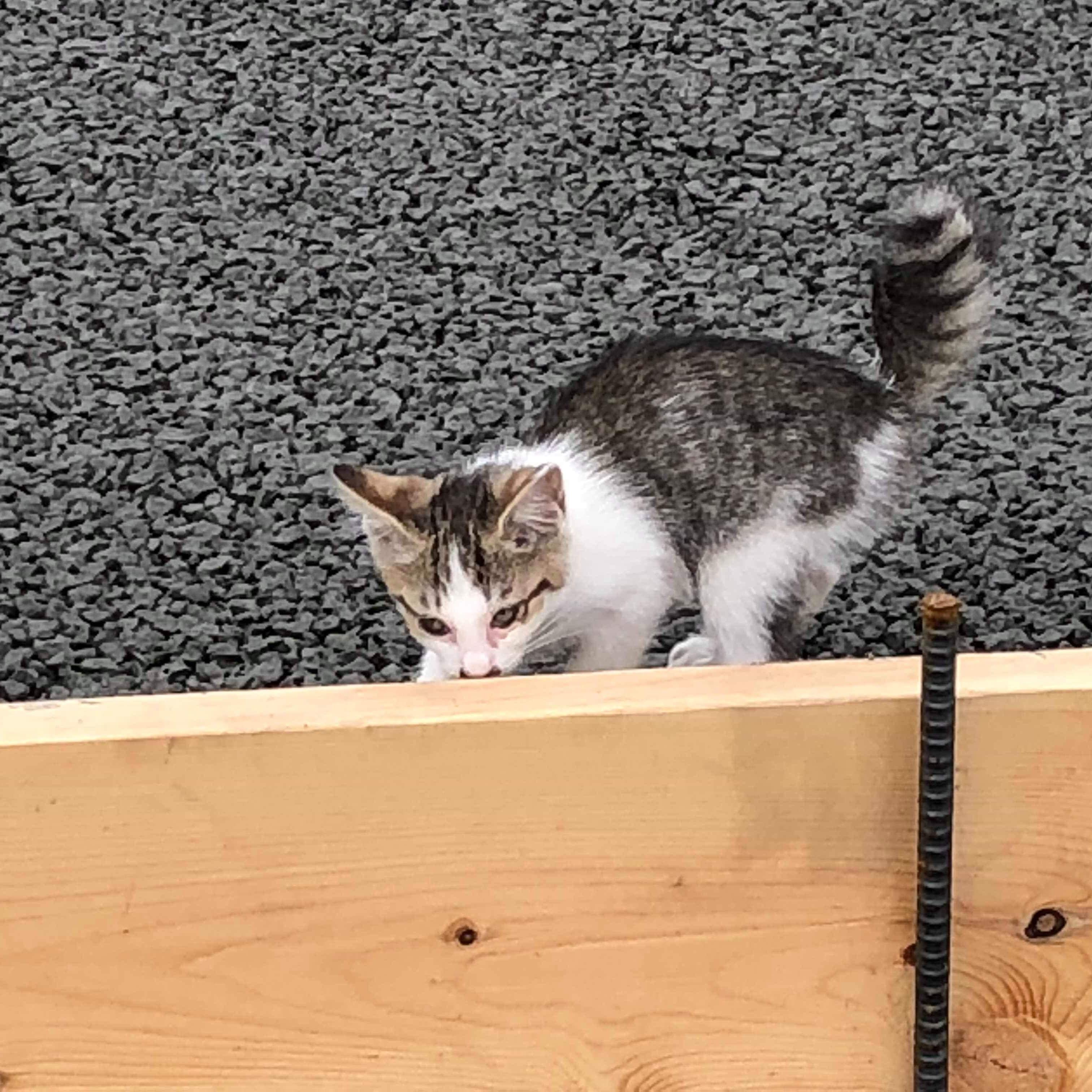 「猫ちゃん大好き♡ 土間コン新提案【透水性コンクリート】」
