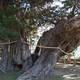 「老木がまだ若木だった頃の人と自然の関係性」