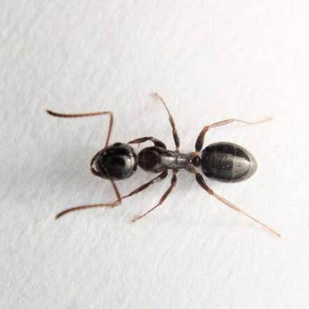 「蟻がわいてしまう・・・」それって、地面が【生きている】証拠だね!(アロー住建)