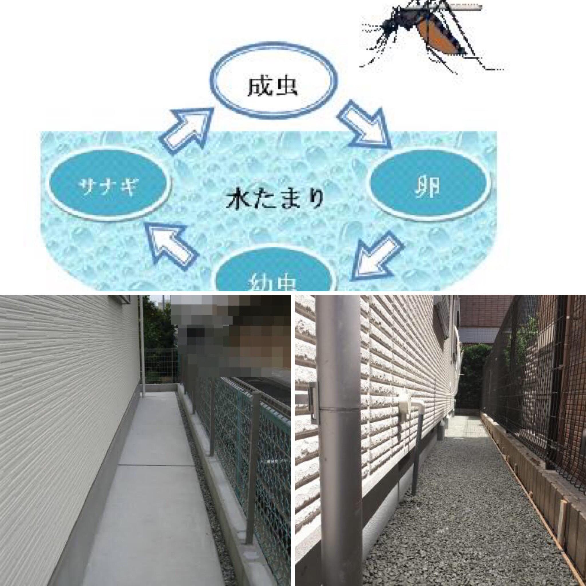 「この季節【蚊】に困っていませんか?」犬走りを透水性コンクリートにすることの意外な効用