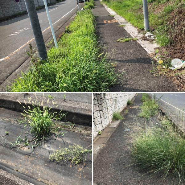 「防草シートって意味あるの?」 下を向いて歩こう #4(埼玉県桶川市)