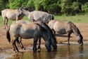 「馬を水飲み場まで連れて行くことはできるが、水を飲ませることはできない」残コン問題の本質
