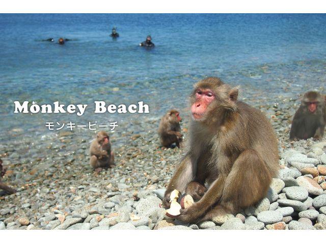 monkey_beach02.jpg