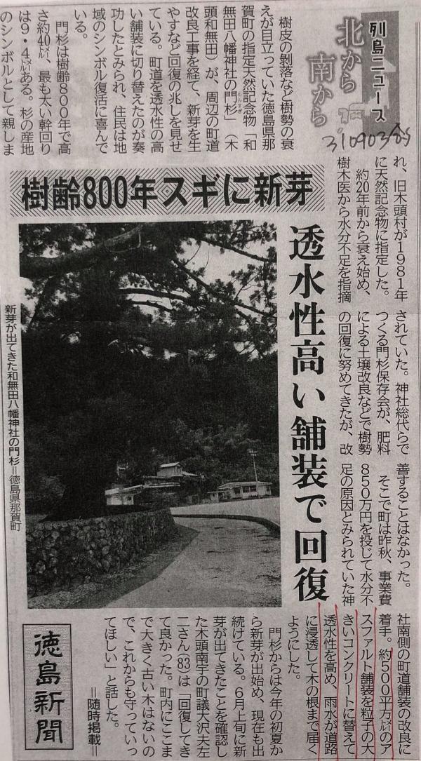 【徳島】樹齢800年スギに新芽「回復してきてよかった」那賀町天然記念物