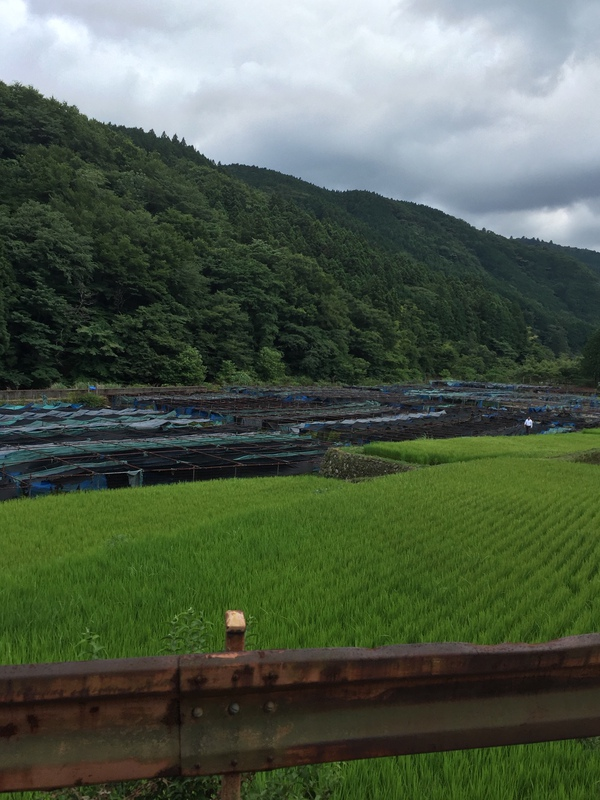 Izu Peninsula, lesser known destination you must see in Japan (part 9)