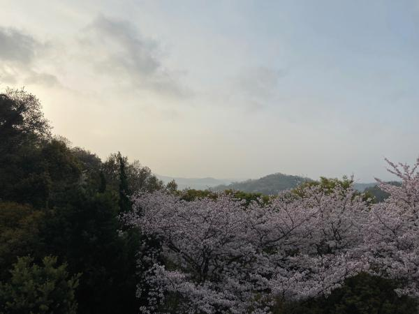 Izu Peninsula, lesser known destination you must see in Japan (part 29)